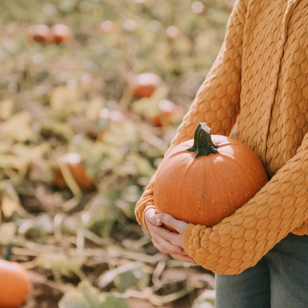Life is gourd at the pumpkin patch