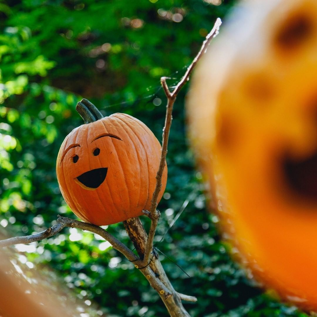 Stay warm and safe out there tonight trick-or-treaters... Happy Halloween! #HvAgventures #VisitPennState #PATravelHappy #agriculture #harvest #farming #explorepa #destination #adventureculture #farms #farmersmarket #restaurants #winery #wineries #breweri