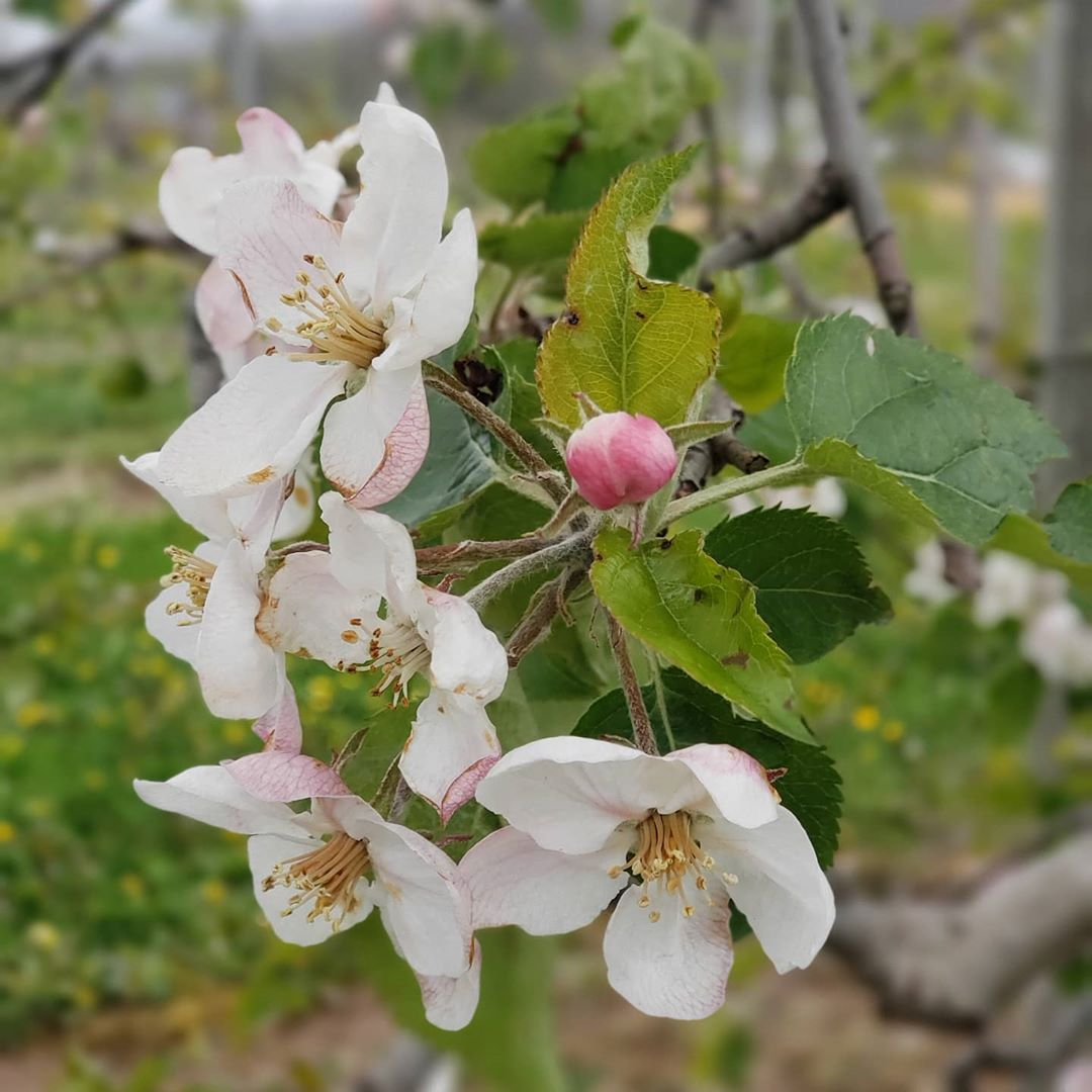 Sign of spring #wayfruitfarm #happyvalleypa #HVAgventures